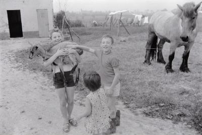 Kinderen op boerderij van M. Geldof, Staden juli 1972